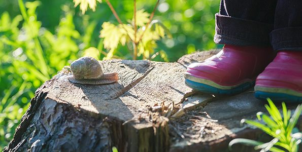 Outdoor schools: finding physical literacy in the forest
