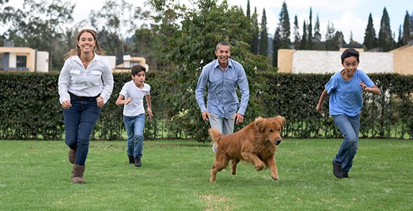 6 ways dogs and kids can have fun moving together