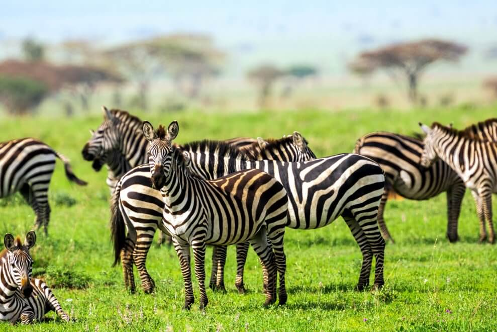 Mother and sitting baby Zebra Active for Life What nature can teach us about physical literacy